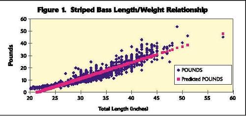 Striped Bass length, weight, age chart